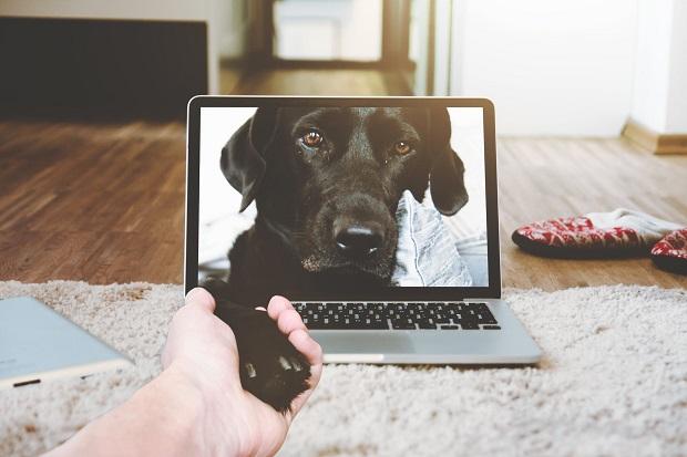 pets-best-friend.jpg