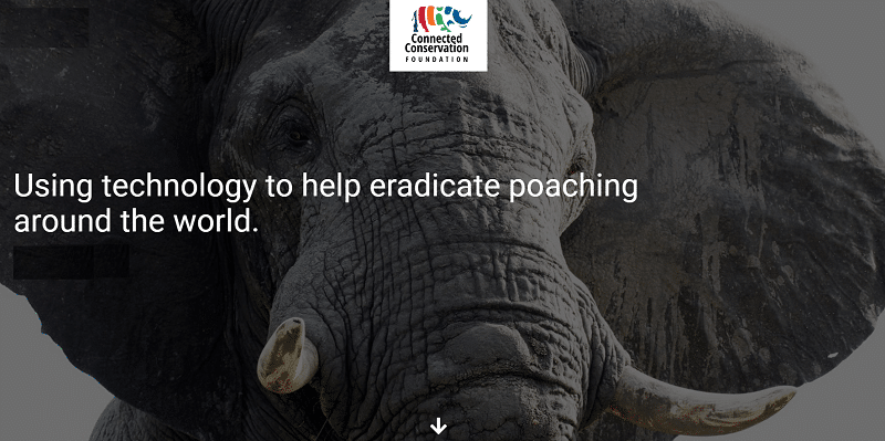 Cisco and NTT back online initiative to combat poaching rise due to pandemic