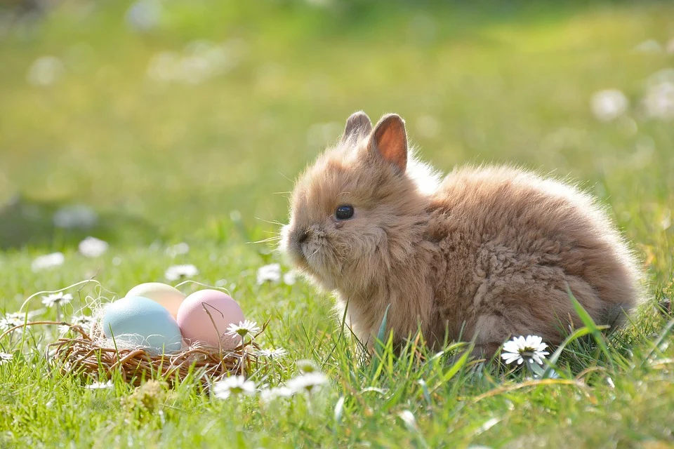 Easter shopping trends: Quizzes, virtual hunts and baking replacing eggs in lockdown